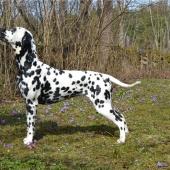 Puding-Dog-Estee-Lauder