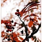 autumn-008a2(C).jpg