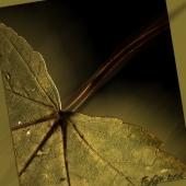autumn-021-5falling(C).jpg