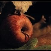 autumn-023-klein2(C).jpg
