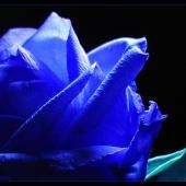 flower-001(C).jpg