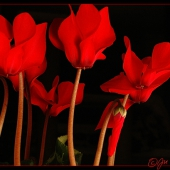 flower-006klein(C).jpg