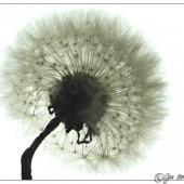 flower-007c-klein(C).jpg