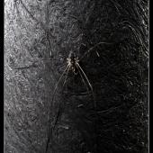 spider-001(C).jpg