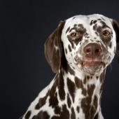 Die Leeloo kann einfach die tollsten Schnuten ziehen <3© Jill Peters
