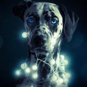Schon in Weihnachtsstimmung?   © Jill Peters