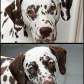 collage-seelenhunde_800px