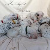 MoonlightSurprise-Tag-18-02