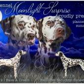 moonlight_surprise_littercard-kl