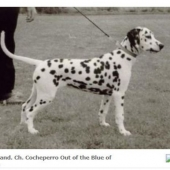 Cocheperro-out-of-the-blue_web