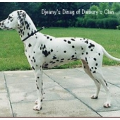 Djeanys-Dinag-of-Dalburys-Clan_web