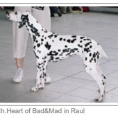 Heart-of-Bad-Mad-in-Raul_web