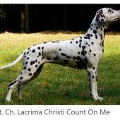Lacrima-Christi-Count-on-Me_web
