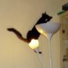 Flying Skippy