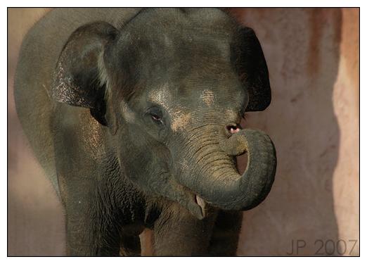 Elefantenkind Tarak