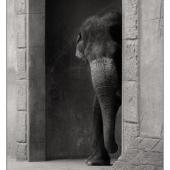 zoo-DSC_4918(C)sep.jpg