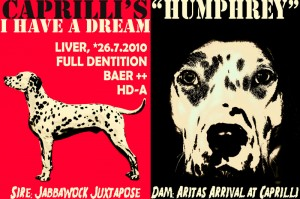 Caprilli*s I Have a Dream - Humphrey