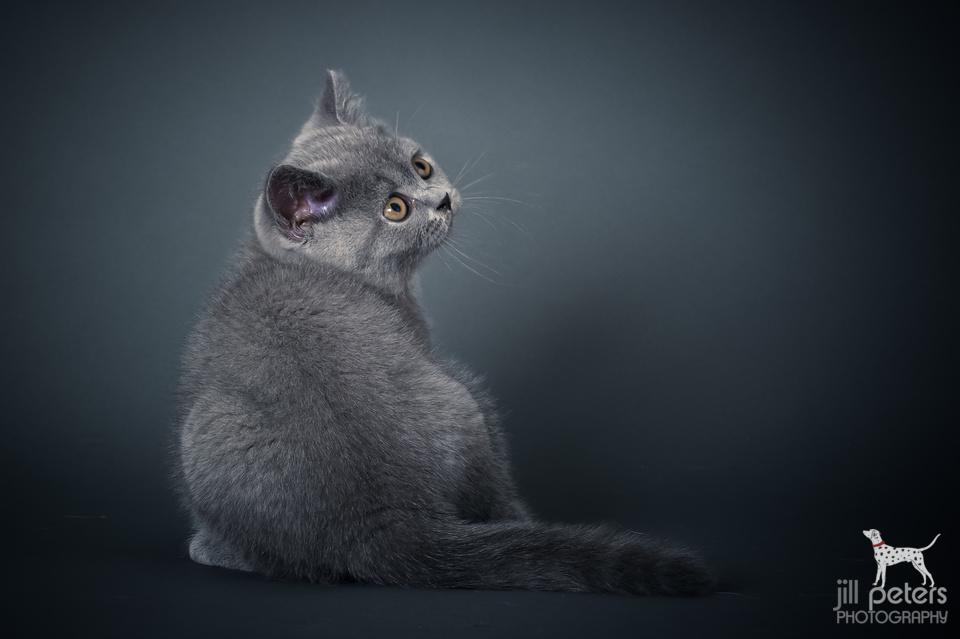 Hunter von den Wasserkatzen