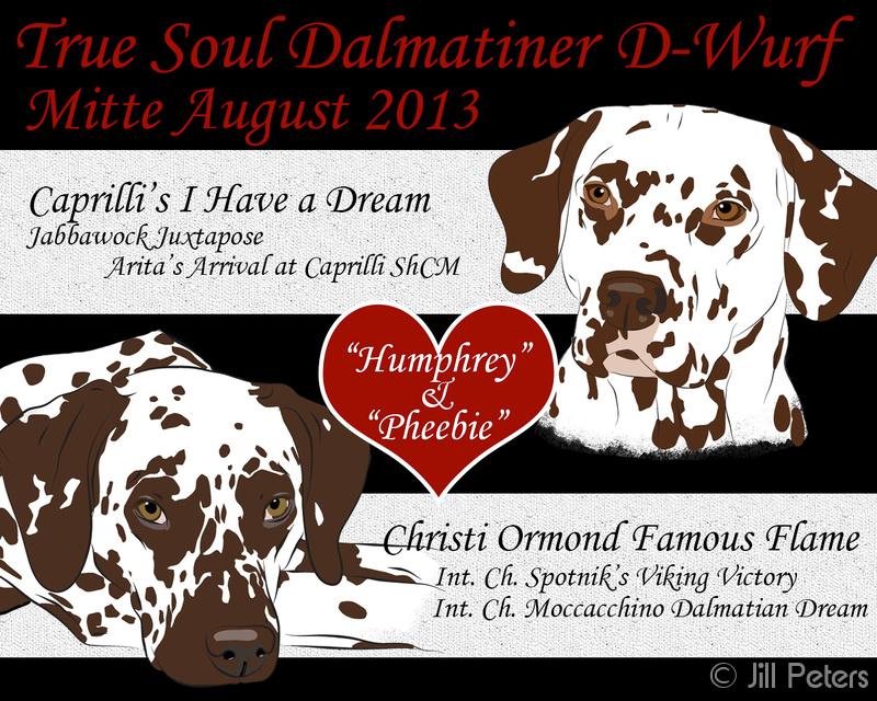 Deckung 16.06.2013: Caprilli's I Have a Dream & Christi Ormond Famous Flame True Soul Dalmatiner
